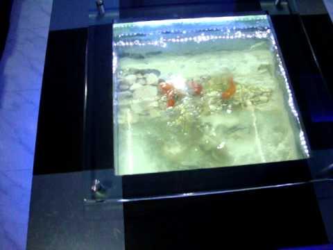 Coffee Table Aquarium in Chennai.design by jabbar. Aquarium design India.chennai 9840717497