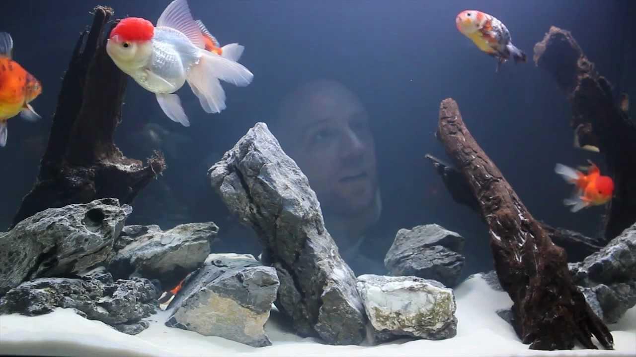 l 233 quipement notre aquarium 65 gallons d eau froide
