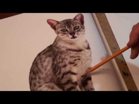 Видео как нарисовать кошку