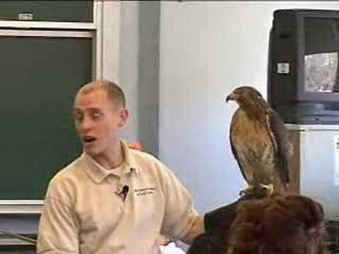 Forest Preserve Dist. of Cook Co. Raptor Presentation Pt. II