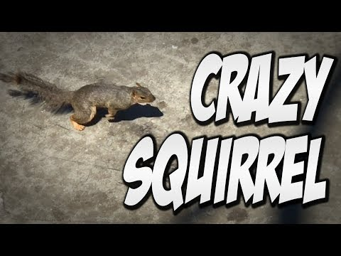 CRAZY SQUIRREL INVADES SKATE PARK !!!  - A DAY WITH NKA -