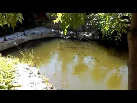 рыбалка на сосенском пруду