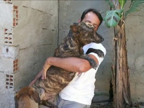 Salvan a Perro con Gusanos en la Cabeza a punto de Morir