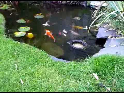 Pond skimmer in action koi fish youtube for Build a koi pond yourself