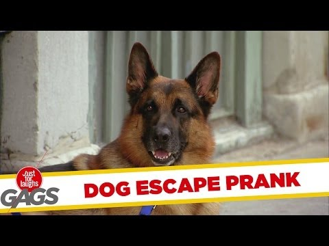 Dog Escape Prank