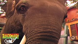 Zoboomafoo 101 - The Nose Knows | HD | Full Episode👃🐽
