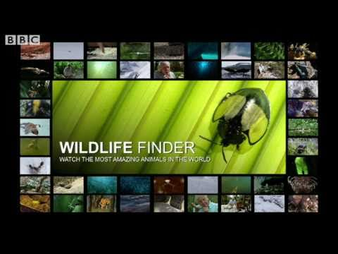 Wildlife Finder: Explore Life On Earth Past and Present - BBC Nature
