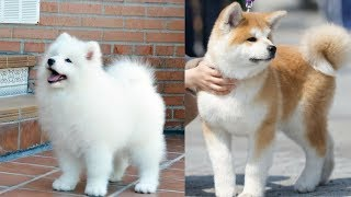 Cutes dogs | Cutest dog in the world | Cute dogs clips #2