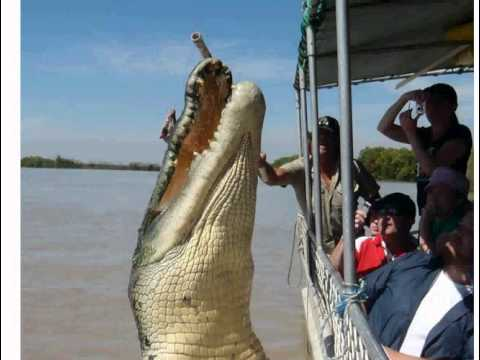 Holidaymaker s leaping crocodile photo wows Web