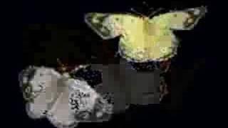 Vídeo 42 de Árbol