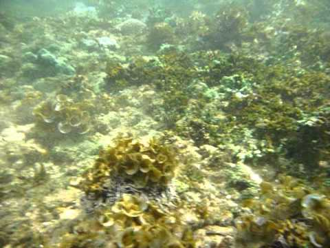 Sri Lanka,ශ්රී ලංකා,Ceylon,Coral Reef (02)