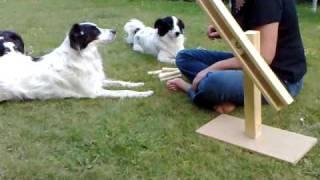 Hunde Intelligenz Spiele