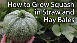 Growing Squash in Straw/Hay Bales - Sustainable Vegetable Gardening