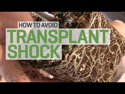 Propagation and Transplanting: How to Avoid Transplant Shock