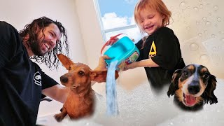 MY DOGS MORNING ROUTINE!! making a Pet Swimming Pool with Dad! (new cleaning game)