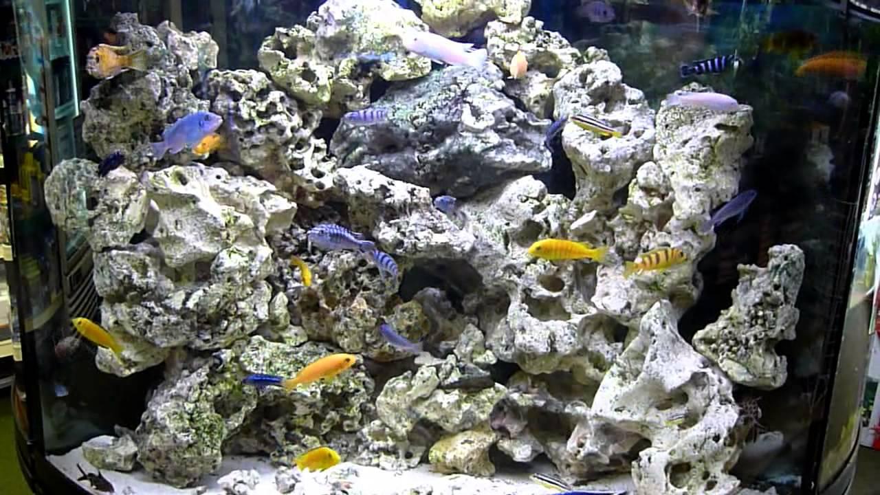 Cichlid Fish Tank Malawi Cichlid Fish Tank