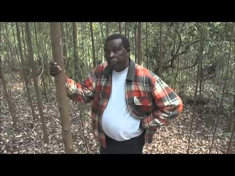 Tree farming business tips