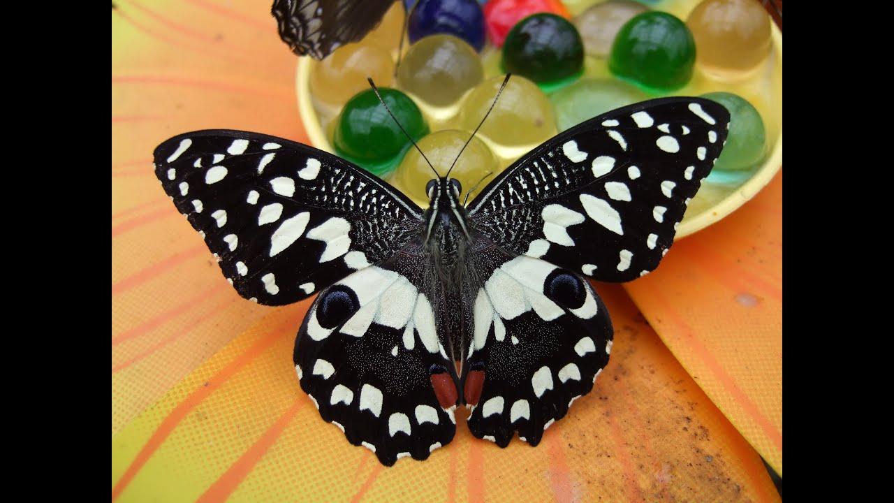 la Casa Delle Farfalle di