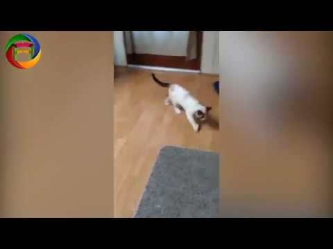 Funny Cat Compilation Funny Animals Videos