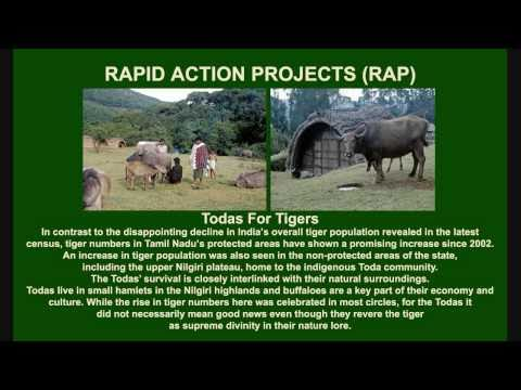 NWHS Presents - WTI Wild Tiger Conservation
