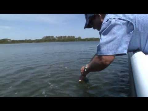 REEL ANIMALS FISHING • Trout (April / Sarasota Bay, Florida)