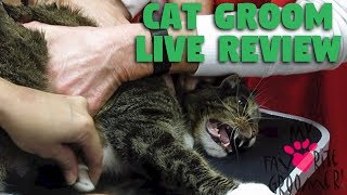 CAT GROOM LIVE REVIEW 1 MILLION VIEWS