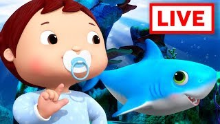 Baby Shark LIVE   +More Baby Songs   Nursery Rhymes   Little Baby Bum