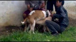 Download DOG Sex Style.mp4 3Gp Mp4