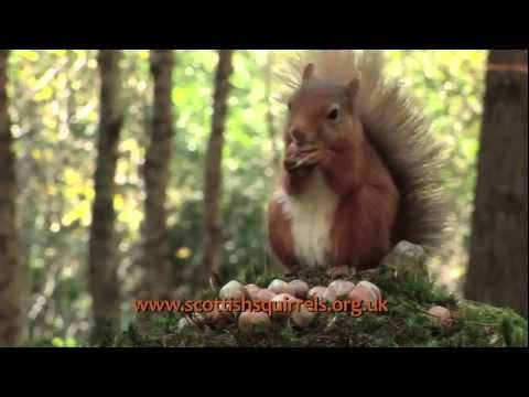 RED SQUIRREL SANCTUARY [www.red-squirrels.co.uk] - SMART COOKIE FILMS LIMITED