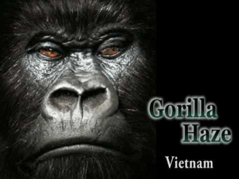 Gorilla Haze- Vietnam
