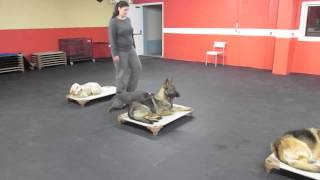 Solid K9 Training Stories - Amy and Lola