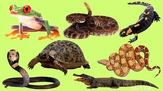 Animals for Kids | Learn Amphibians and reptiles | Learn names and Sound Animals |Animals in English