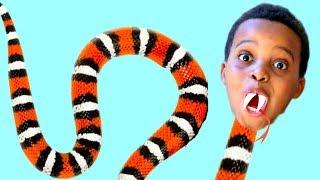 Bad Baby ANACONDA SNAKE ATTACKS KIDS! Shiloh And Shasha SUMO! - Onyx Kids