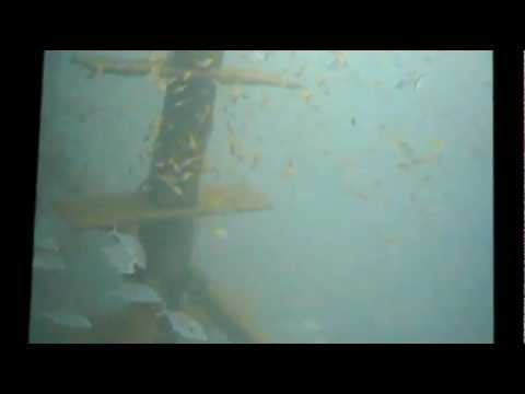 Sydney's offshore artificial reef six month old.wmv