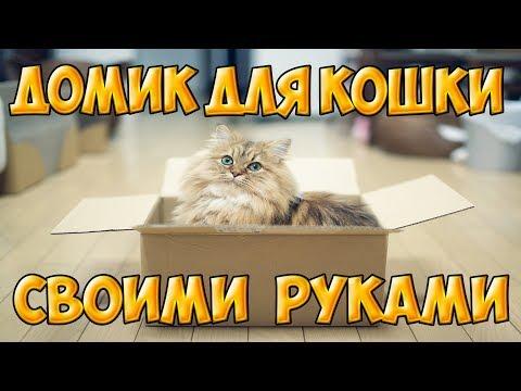 дом для кота из коробки :: VideoLike