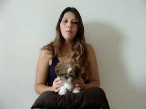 Tutorial: Adestramento sanitário para cães