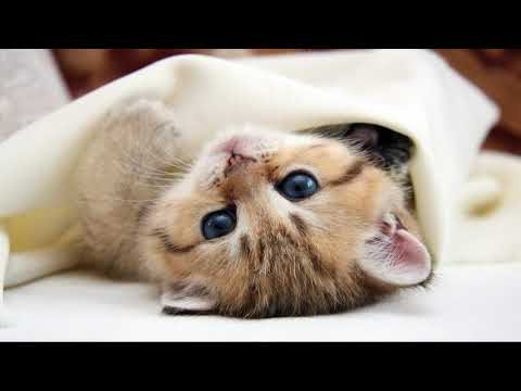 Cute Cat Kitten Hd Wallpaper Images Video- Must watch and download for free 😍