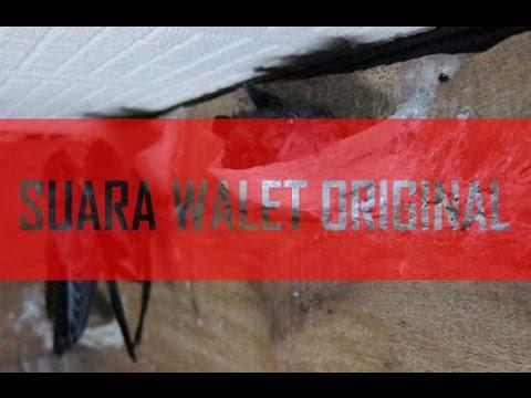 SUARA WALET PANGGIL POP 3 # 6