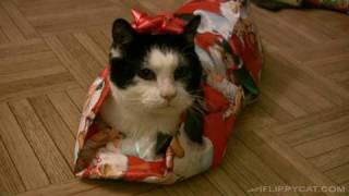 Thumb Como envolver a tu gato para Regalo de Navidad