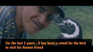 One of the Strange Friendships between a Magellanic Penguin and A Human , Dinim and Desouza