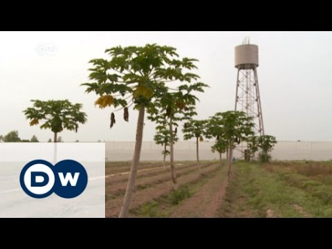 City farming in West Africa | DW News