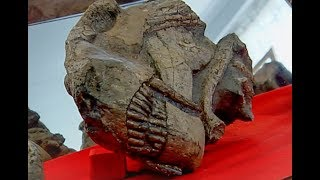 Fascinating Karoo Fossils