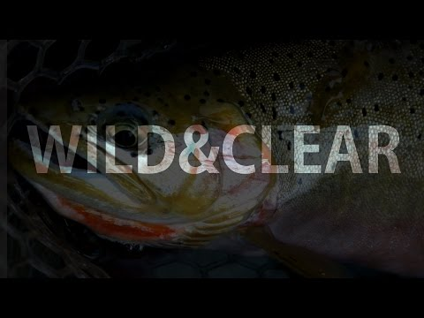 WILD & CLEAR - Fishing Montana