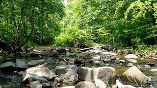 Relaxing nature video.  Water stream and birdsong sound.  Study music stress Relief music ●114●