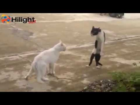 คลิปแมวตลก 2013
