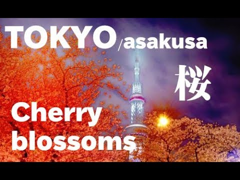 TOKYO  JAPAN 浅草・隅田川の桜(sakura) と東京スカイツリー Cherry Blossom of the Sumida River in Tokyo 花の名所案内