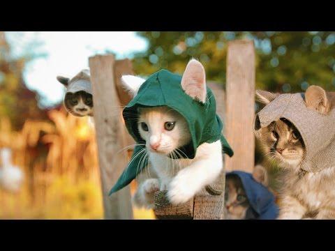 4匹の可愛い子猫達がが暗...