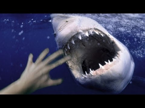 MAN FIGHTS OFF BIG SHARK - REAL OR FAKE? Music Videos