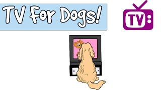 3 HOURS OF TV for Dogs, Combined with Relaxing Music for Dogs, Stimulation for Dogs and Puppies 🐶📺
