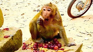 sweet pea eat grapes too much full until choking throat very sad for poor monkey